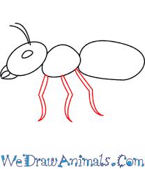 draw ant