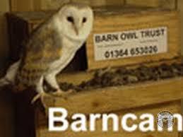 The Barn Owl Carol Stream Barn Owl Webcams The Barn Owl Trust