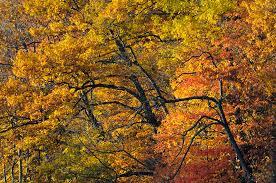 fall foliage color nature photography