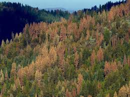 hotter droughts forests and the leaf to landscape project