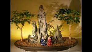 miniature indoor bonsai tree garden youtube
