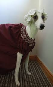 funny thanksgiving dog pictures every friday i dress our family dog in a funny costume and put a