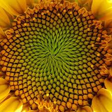 fractal pattern in nature fibonacci patterns in nature pattern in nature pinterest