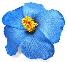 blue flower blue foam hibiscus flower hair clip