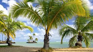 islands palms palm island beautiful beaches trees