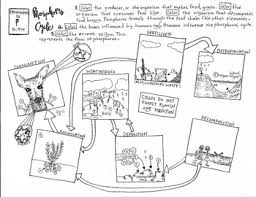 ecology coloring sheet food web energy pyramid food chain