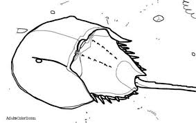 horseshoe crab cliparts cliparts zone
