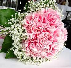 wedding flowers halifax baby s breath pink carnations bouquets carnations are so