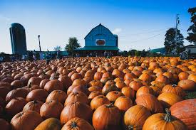 Local Pumpkin Patches Find The Perfect Pumpkin Patch And Farm Near Toronto
