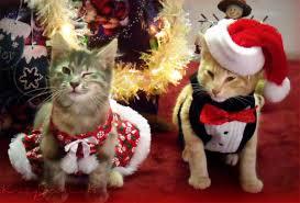 cat christmas 10 cat elves delivering christmas cheer temple illuminatus