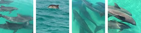 key west u0027s 1 dolphin watching tour family fun for everyone see