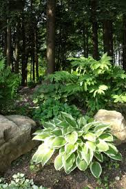 401 best hostas and ferns ii images on pinterest shade plants