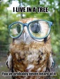 Owl Memes - owl memes people of tumblr facebook