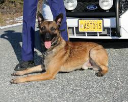 belgian malinois police alaska state troopers mourn slain k 9 as suspect appears in court