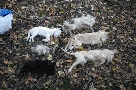 pics of dead dogs dumped on roadside reveals horror of
