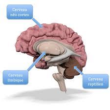 si e des motions dans le cerveau quel lien entre décision et émotion la confiance en vous