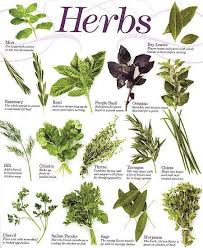 herb chart kitchen herbs reference chart the secret moon garden cooking