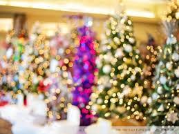christmas trees bokeh uhd desktop wallpaper for ultra hd 4k 8k