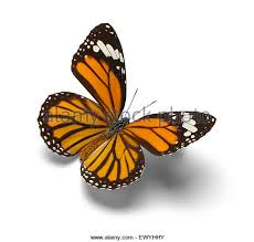 butterfly cut out stock photos butterfly cut out stock images