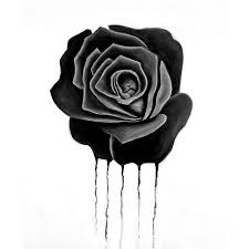 black roses dongetrabi black drawing images