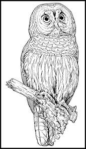 236 best coloring pages owls images on pinterest coloring