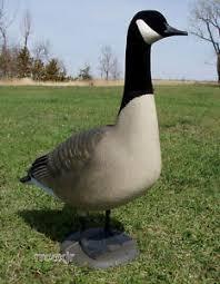 avery ghg hs looker canada goose decoy yard lawn decor