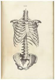 Human Anatomy Textbook Online Top 25 Best Anatomy Tattoo Ideas On Pinterest Surrealism