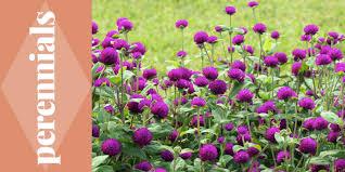 flower gardens earl may nursery and garden centers