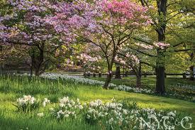 Ny Botanical Garden Hours Ny Botanical Garden Classes Best Idea Garden