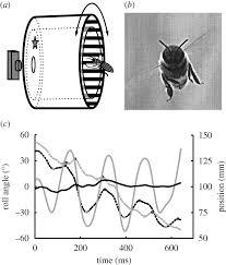 visual gaze control during peering flight manoeuvres in honeybees
