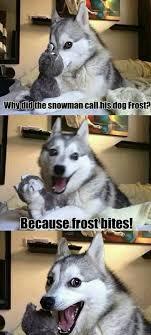 Pun Husky Meme - 418 best lols and rofls images on pinterest funny stuff doggies