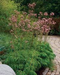 tough ground covers gardening