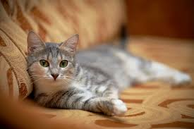 natural home remedies for cats with fleas