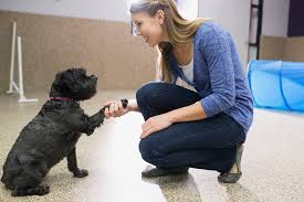 dog daycare floor plans dog daycare startup tips and suggestions