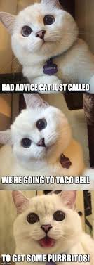 bad advice cat just called we re going to taco bell to get some