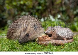 hedgehog garden ornament stock photo royalty free image