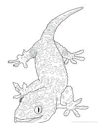 desert lizard coloring page lizard coloring page desert lizard coloring pages frilled lizard