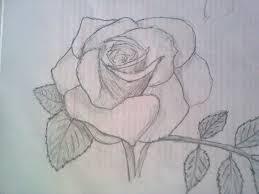 rose sketch by terhadalas on deviantart