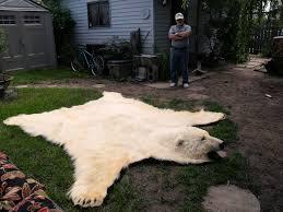real polar bear rug rugs ideas
