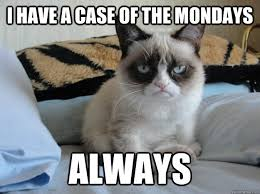 Case Of The Mondays Meme - i have a case of the mondays always grumpy morning cat quickmeme