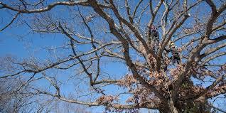 heartwood tree company wisconsin wood