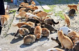 cat island japan s cat island asks internet for food gets more than they can