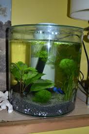 idee deco aquarium bureau a la maison design 9 aquarium kit round 360176 10l