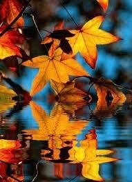 imagenes animadas de otoño 32 imágenes animadas hojas de otoño 1000 gifs gif s pinterest