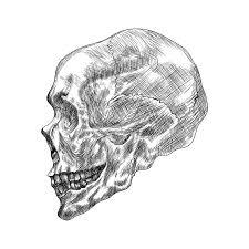 sketch of profile human skull hand drawing vector illustration
