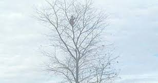 kid climbed the hell out of this 50 foot tree the daily f