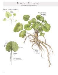 edible native plants 66 square feet plus april 2017