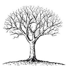 white oak coloring page white oak coloring page coloring pages