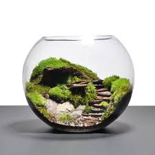 terrarium 14 best places to find