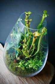 25 best moss terrarium ideas on pinterest moss garden moss